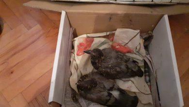 Photo of Nišlija zbrinuo dva nemoćna ptića, ostavljena u kutiji po ovoj hladnoći