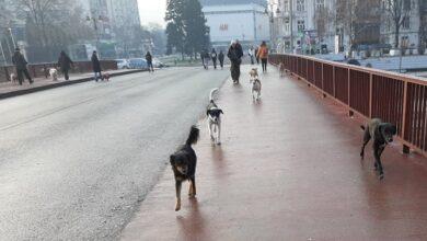 Photo of Ćirić: Jedno od rešenja problema pasa lutalica je stroža kontrola neodgovornih vlasnika i njihovih pasa
