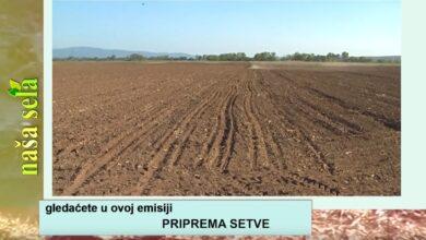 Photo of Naša sela: Izbor hibrida i agrotehničke mere u setvi kukuruza