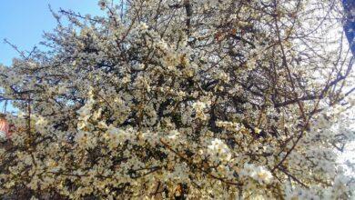 Photo of Stiže nam proleće