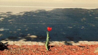 Photo of Sasvim neobičan Uskrs na niškim ulicama (FOTO)