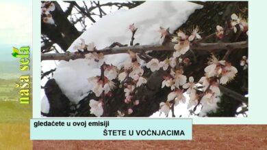 Photo of Naša sela: Kako zaštititi voćne zasade