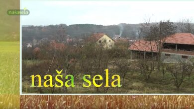 Photo of Naša sela: Pijaca Niška-Friška