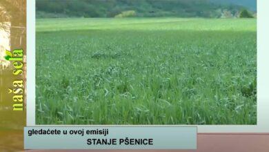 Photo of Naša sela: Povrtarstvo je ekonomski održivo