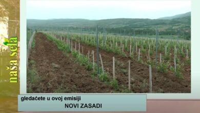 Photo of Naša sela: Sve više mladih voćnjaka i vinograda