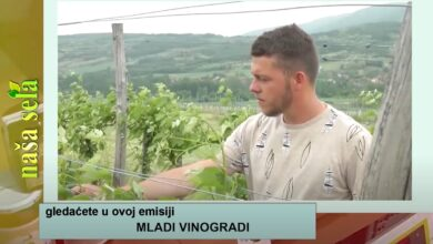 Photo of Naša sela: Podizanje novog vinograda