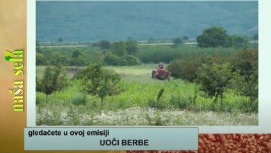 Photo of Naša sela: Uoči berbe višanja