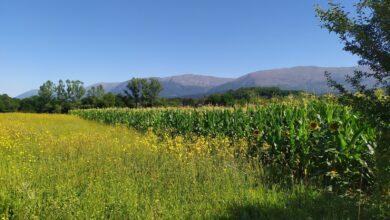 Photo of Zaplanjske priče: Lubenice na vašarskoj poljani