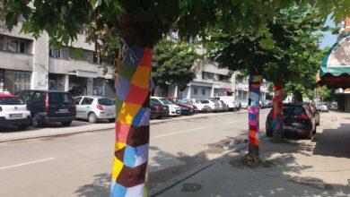 Photo of ULICA DRAGIŠE CVETKOVIĆA : Drveće u letnjim haljinama