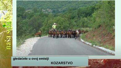 Photo of Naša sela: Preporučljivo još jedno prskanje pre berbe