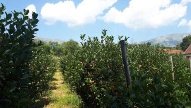 Photo of ''Ogledna bašta'' – zdrava hrana i očuvana priroda