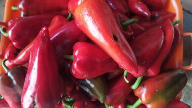 Photo of Umete li da kupite papriku za ajvar… i ponešto o prevarama jednog dela seljaka i nakupaca