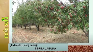 Photo of Naša sela: Osiguranje voćnih zasada