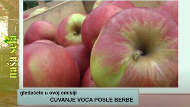 Photo of Naša sela: Skladištenje voća posle berbe