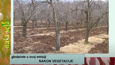 Photo of Naša sela: Mere u voćnjacima