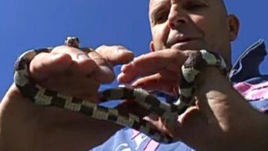 Photo of Stomatolog iz Niša ima neobičan hobi – druži se sa zmijama