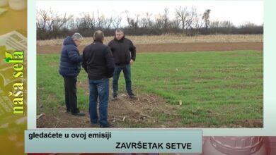 Photo of Naša sela: U kojoj su fazi ozimi usevi