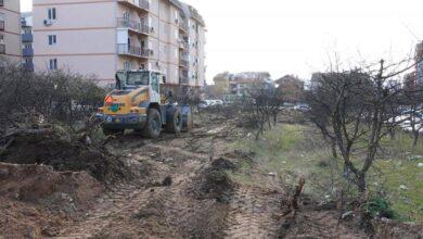 Photo of Umesto zgrade park i 170 stabala smrče