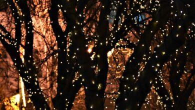 Photo of Niš u novogodišnjem ruhu (FOTO)