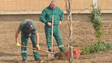 Photo of U Nišu za godinu posađeno rekordnih 1500 novih stabala četinara i lišćara