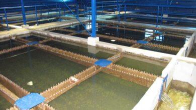 Photo of Povećan stepen zamućenja vode na većini izvorišta