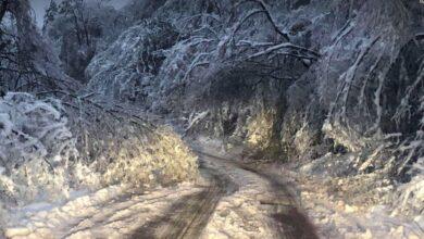 Photo of Palo drveće na putu od Kameničkog Visa do Cerja. Oštetilo i kamp kućice